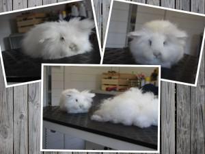 bailey konijn